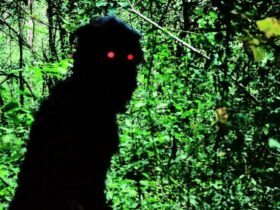 Uncle Boonmee Who Remembers Past Lives |  In the mood for East