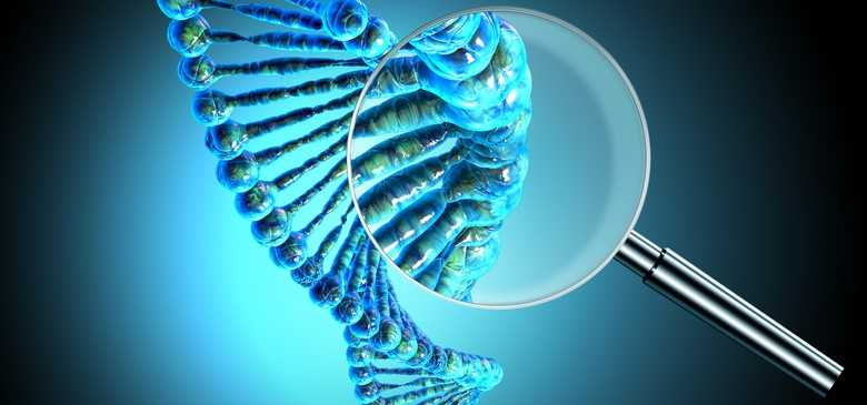 Evolution: it can also depend on a single gene