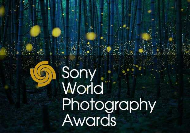 Sony World Photography Awards 2020, Open: analisi dei vincitori