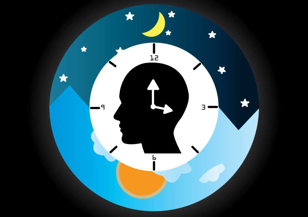 Circadian cycle: Bacteria also have one
