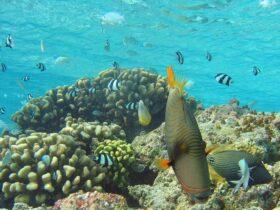 Agriculture: a strange marine breeding