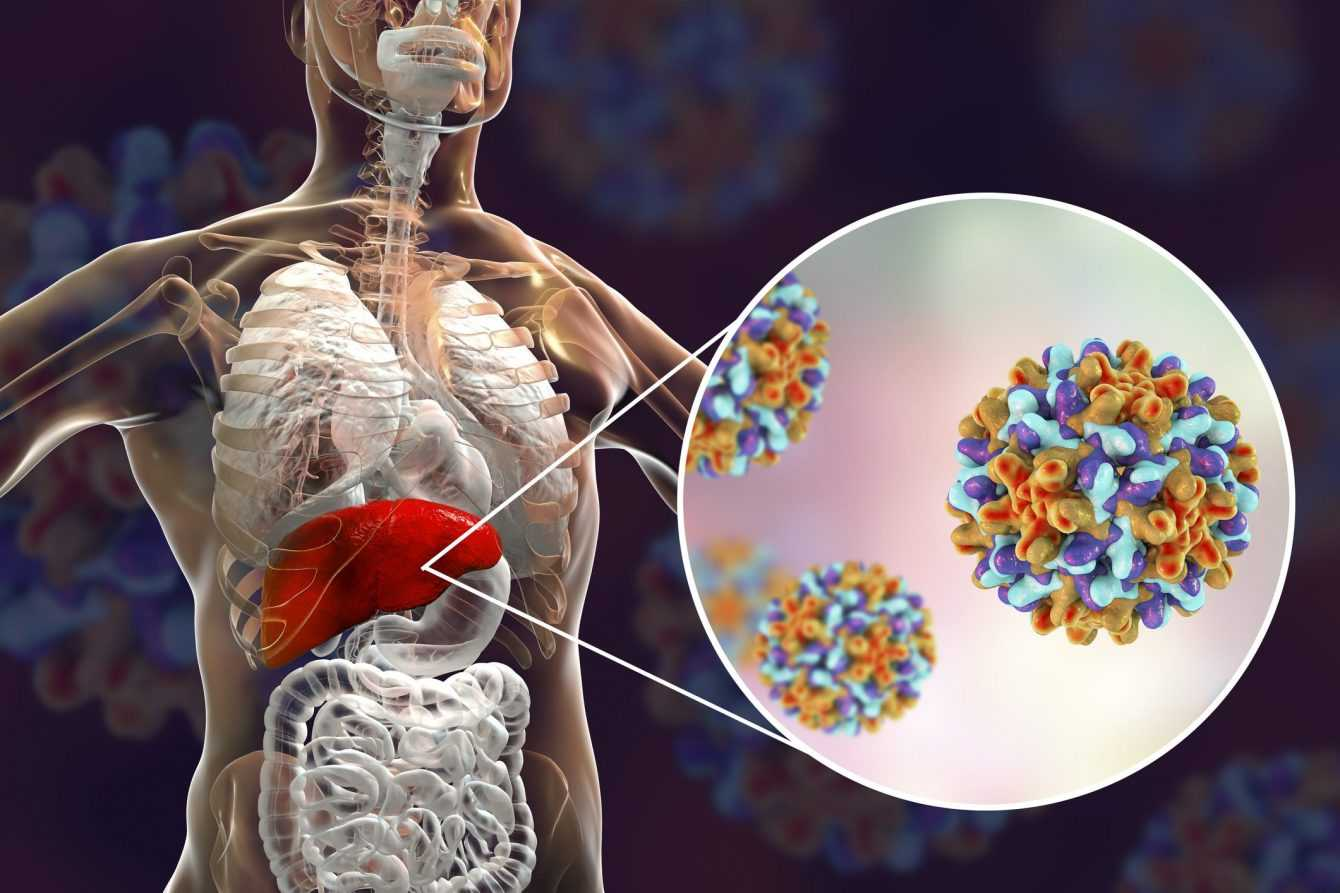 Hepatitis C: a promising discovery to cure it