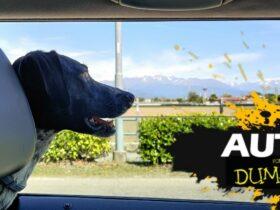 7 consigli per viaggiare con il proprio cane